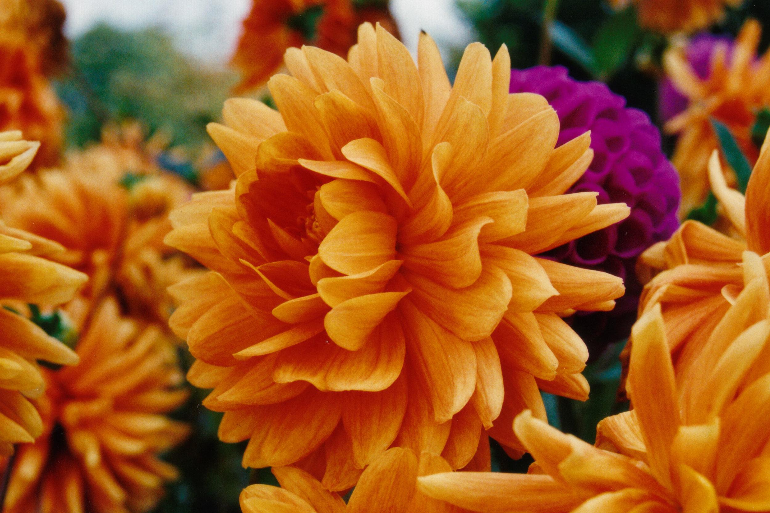 Flowers to Print-2.jpg