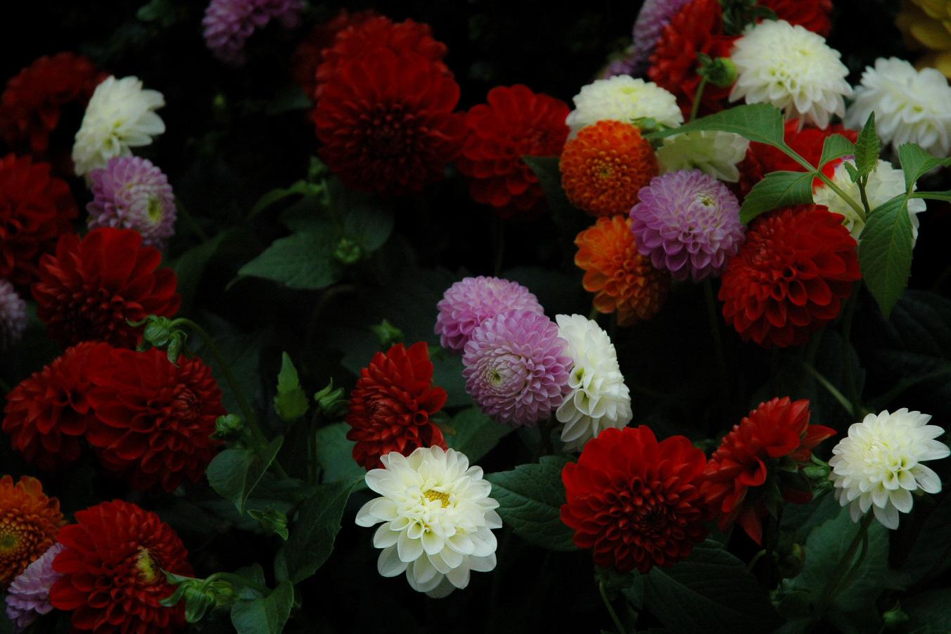Flowers to Print-6.jpg