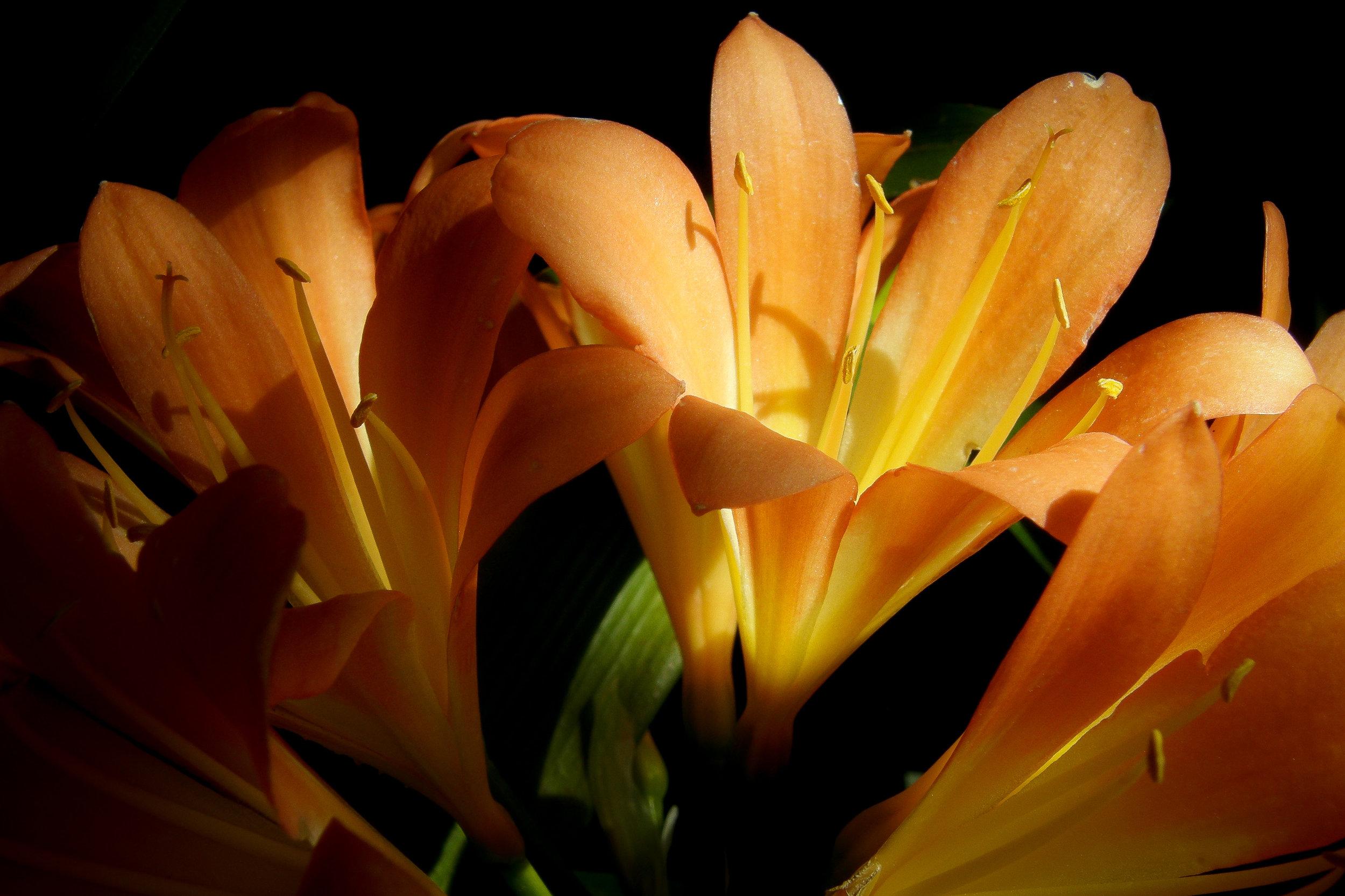 Flowers to Print-7.jpg