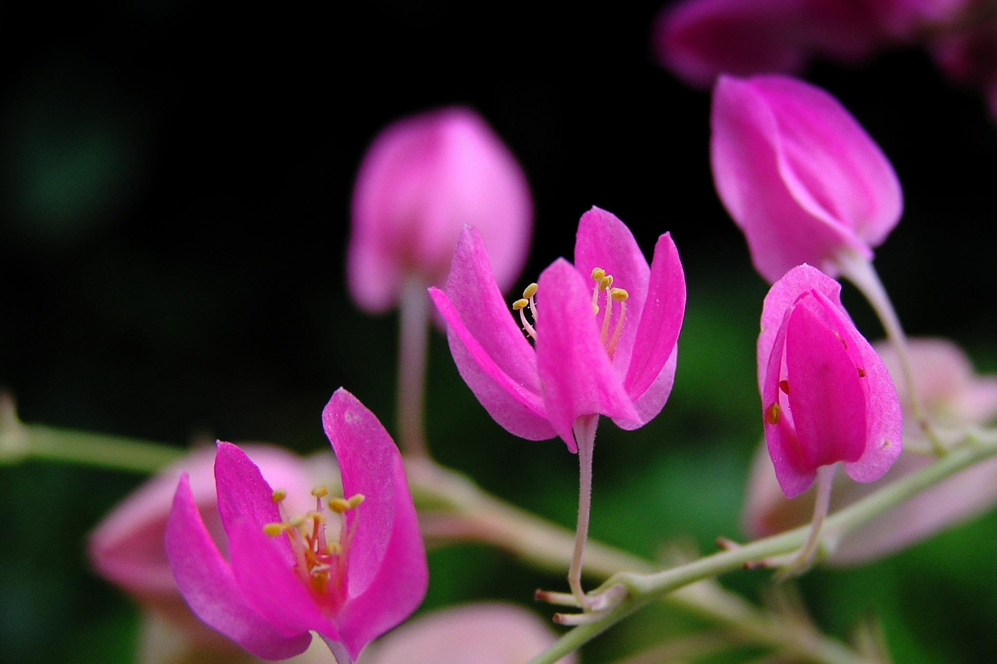 Flowers to Print-5.jpg