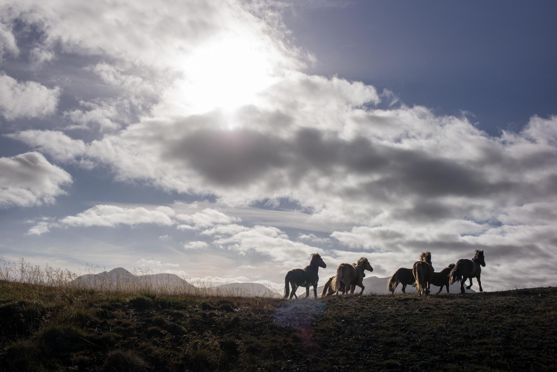 Wander-Iceland-22.jpg