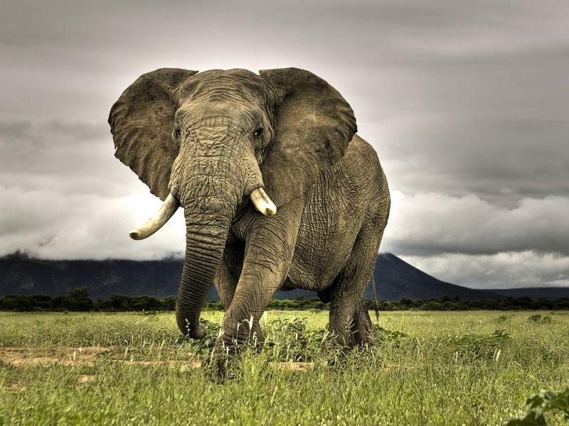 Grande Elefante_800.jpg