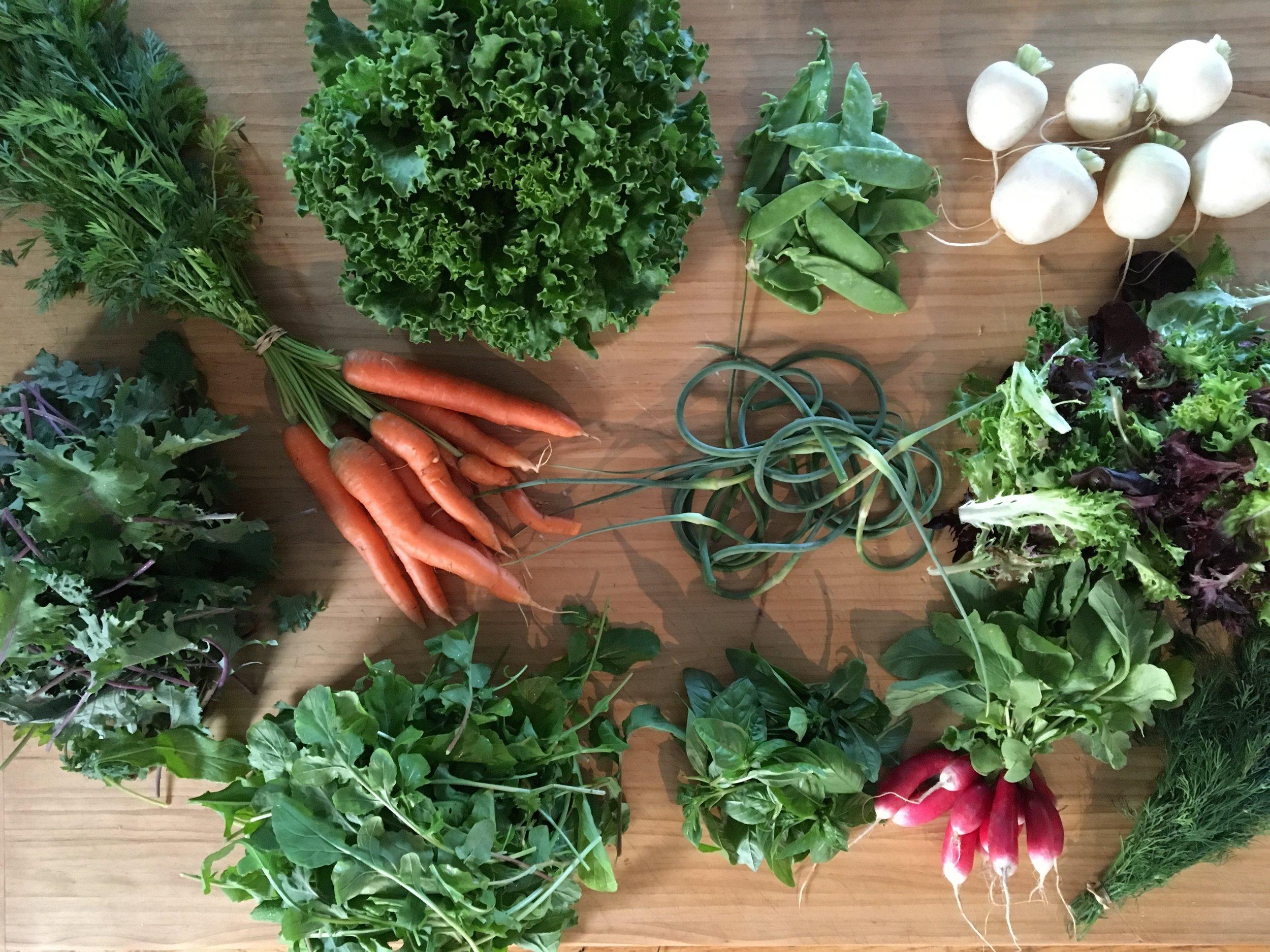 CSA Week #3 - Carrots, Head Lettuce, Snow Peas, Hakurei Turnips, Baby Kale, Garlic Scapes, Salad Greens, Arugula, Basil, Radishes and Dill.