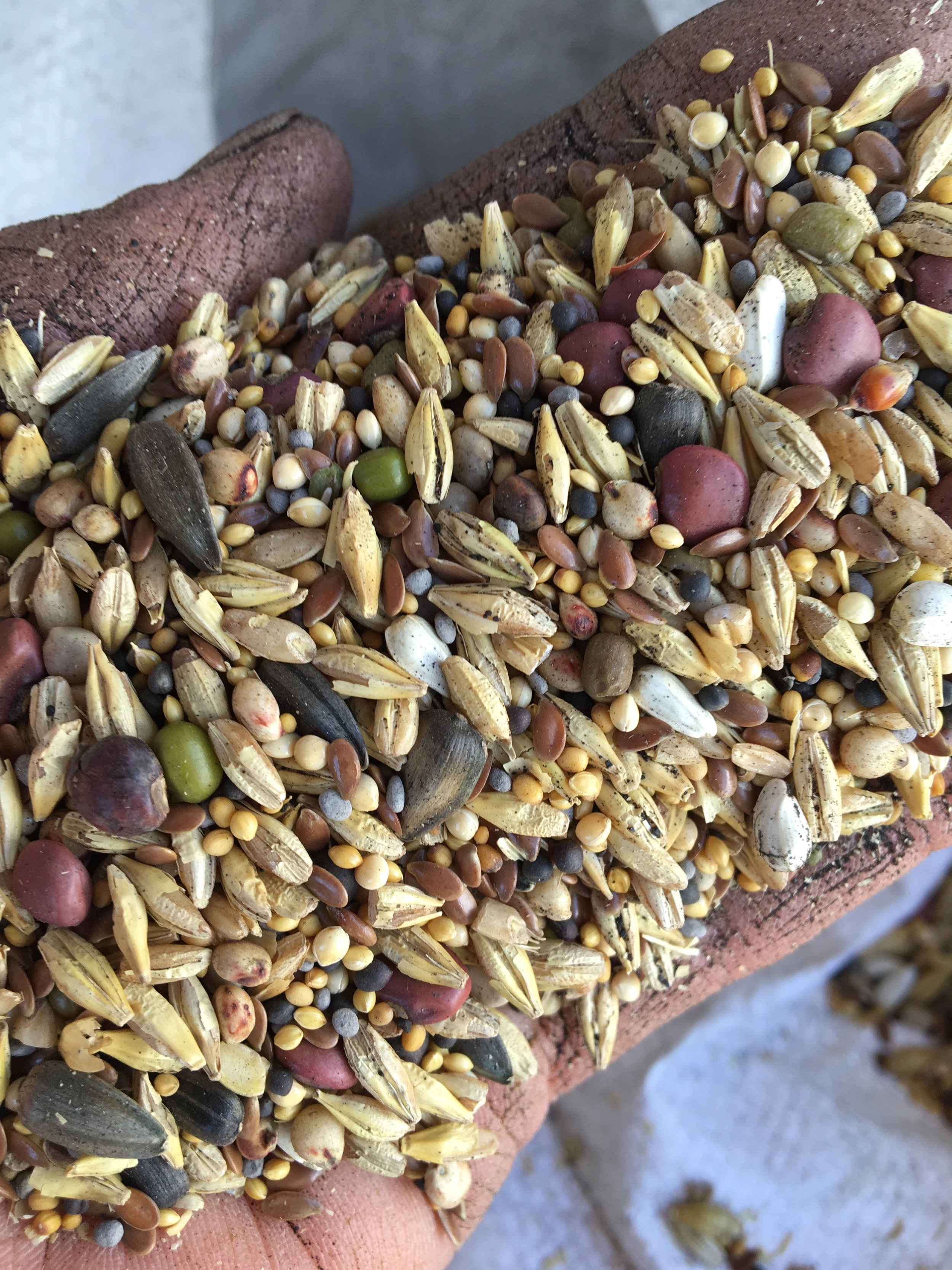 Cover Crop Seed Mix - SO gorgeous!