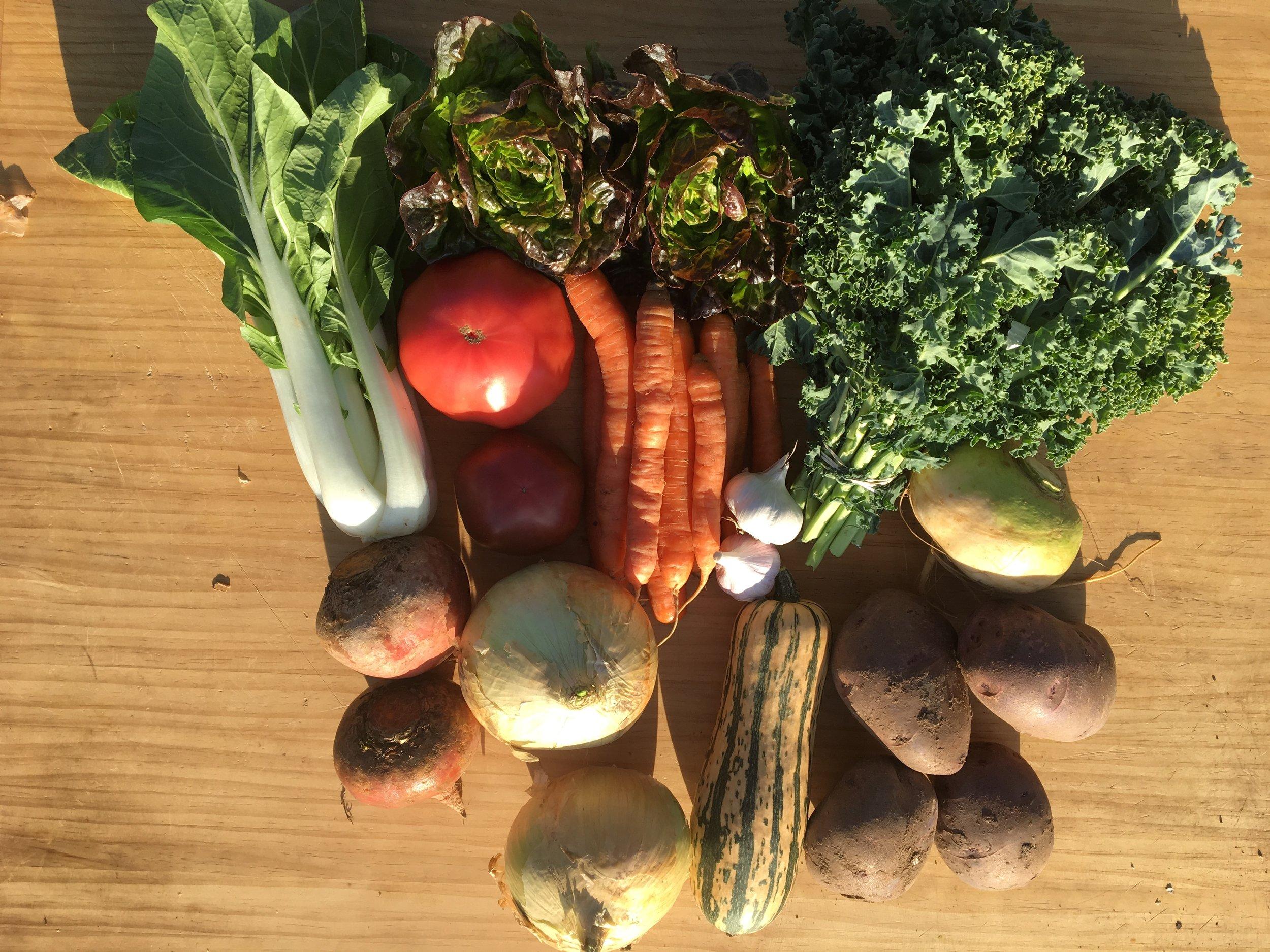 Summer CSA Week #18:Bok Choy, Little Gem Lettuces, Kale, Heirloom Tomatoes, Carrots, Garlic, Golden Turnip, Golden Beets, Walla Walla Onions, Delicata Squash and Purple Viking Potatoes!