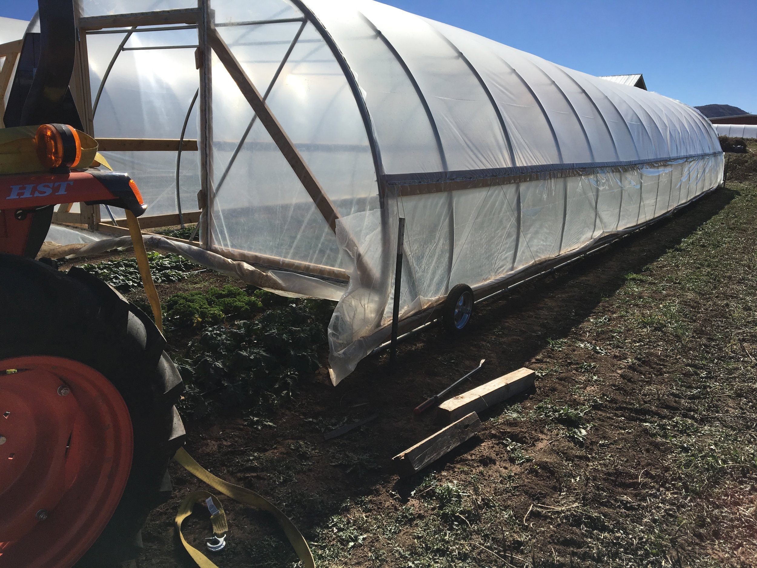Greenhouses were moved this week and are now protecting greens for the Fall CSA
