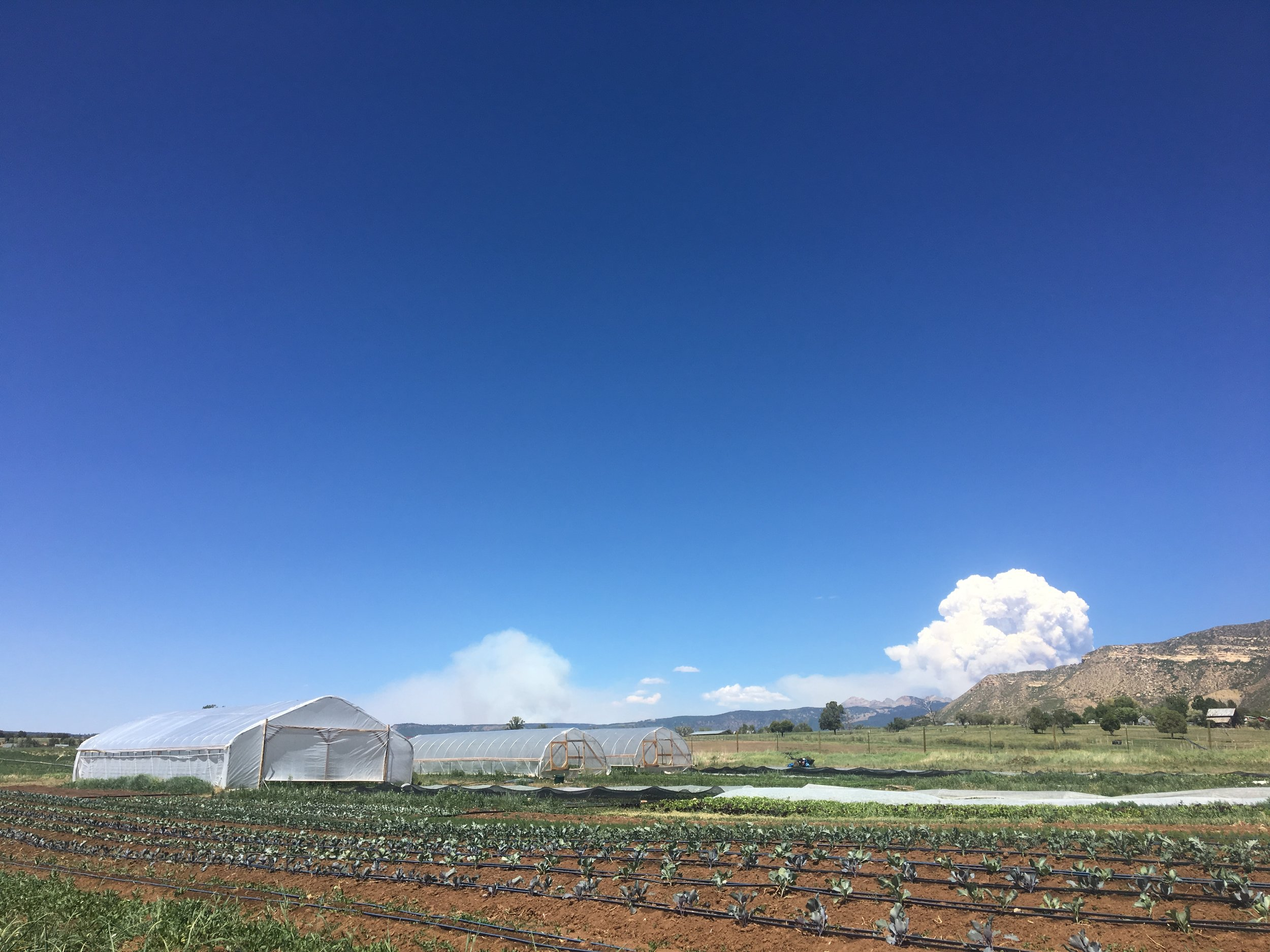 View of the Burro Fire (left) and 416 Fire (right) smoke plumes on Friday from the farm