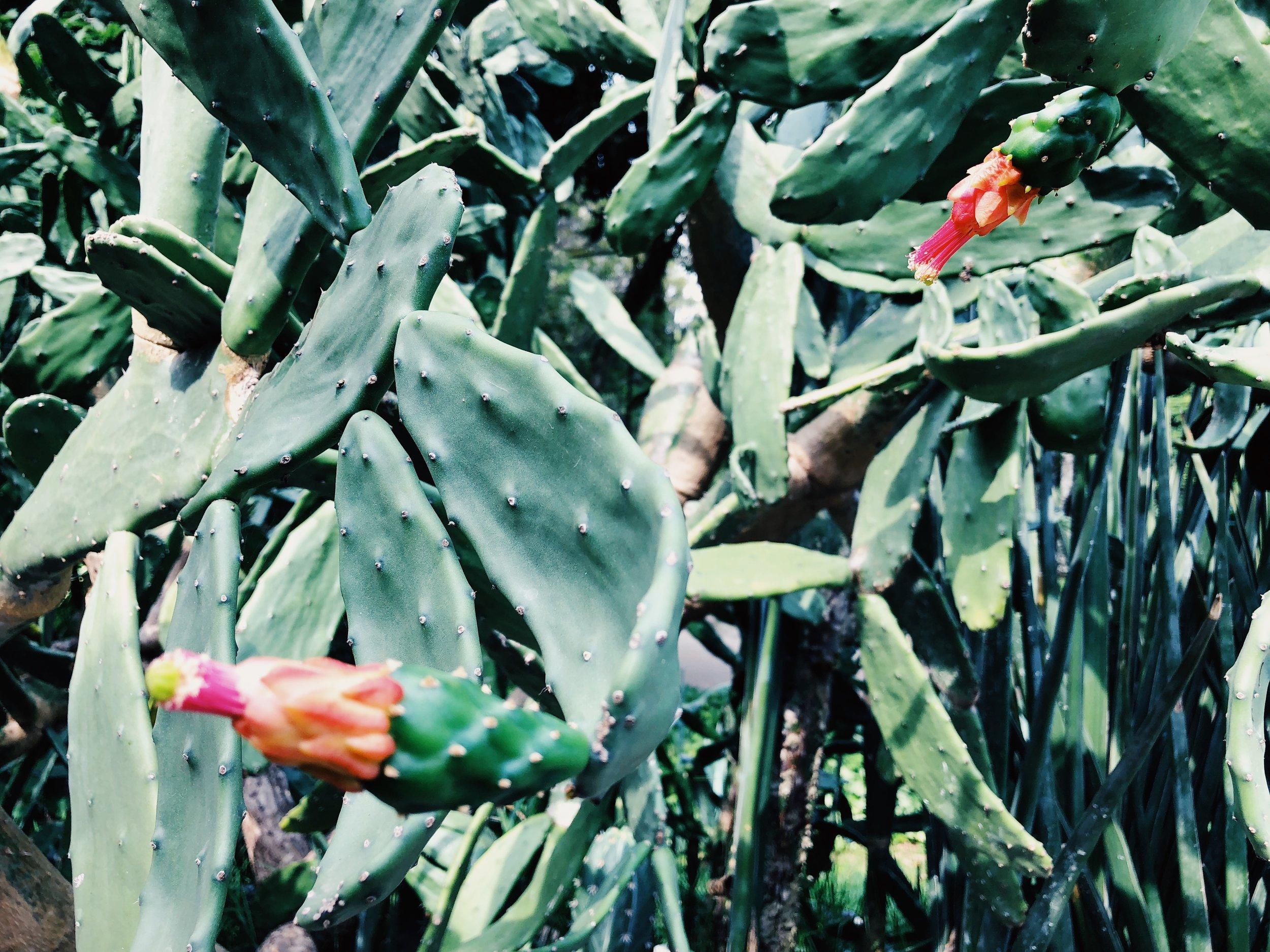 jardim botanico - rio de janeiro