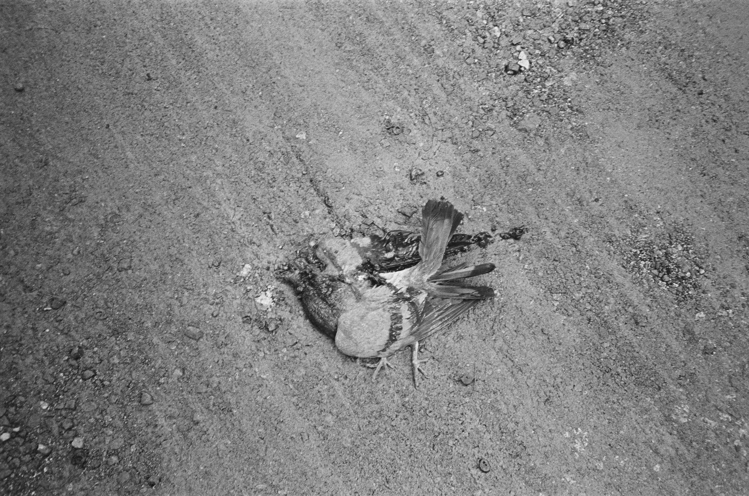 Khoman Room_Blog_Journal_Dead Bird