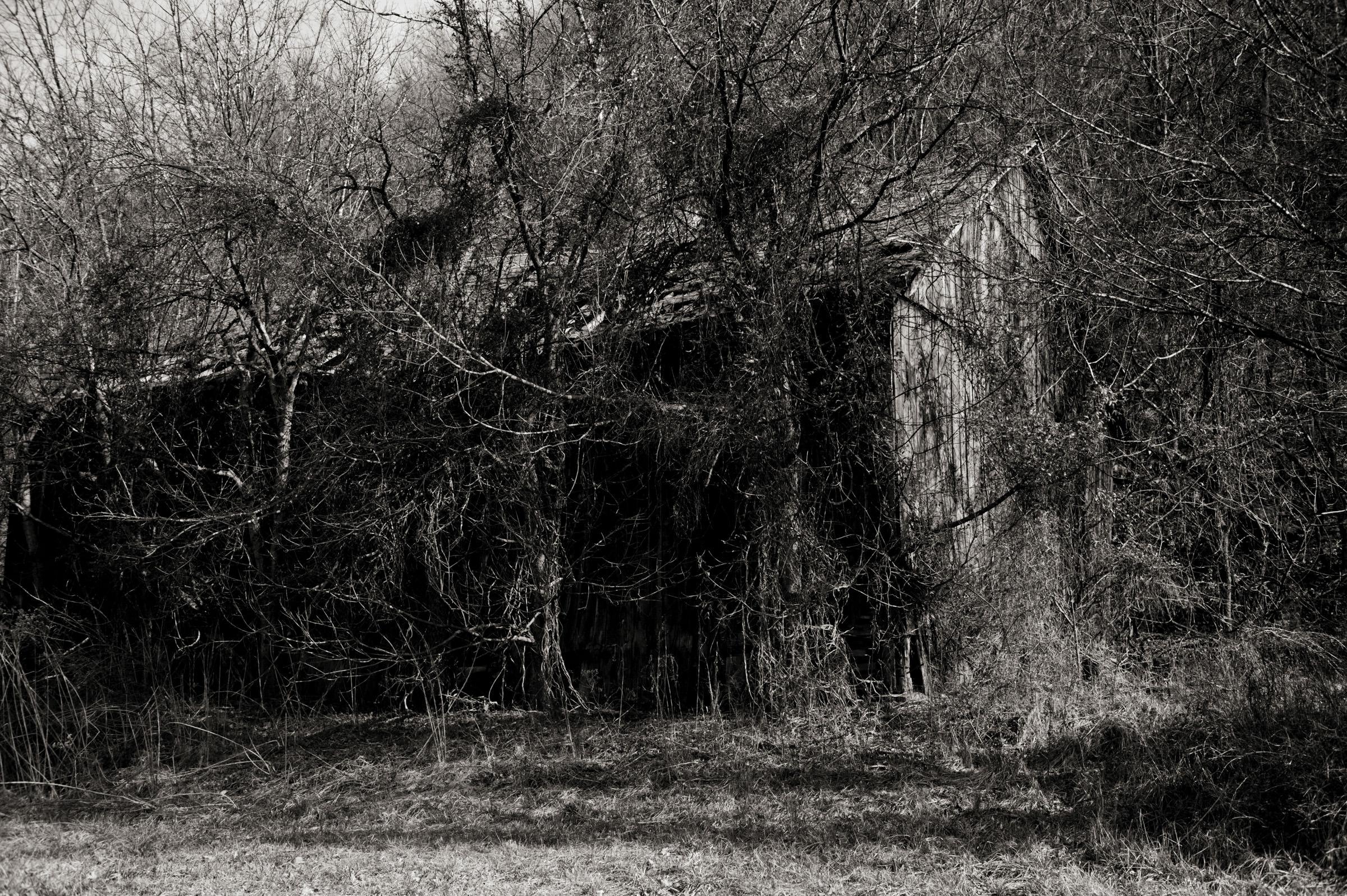 Manmade Wilderness 002.jpg