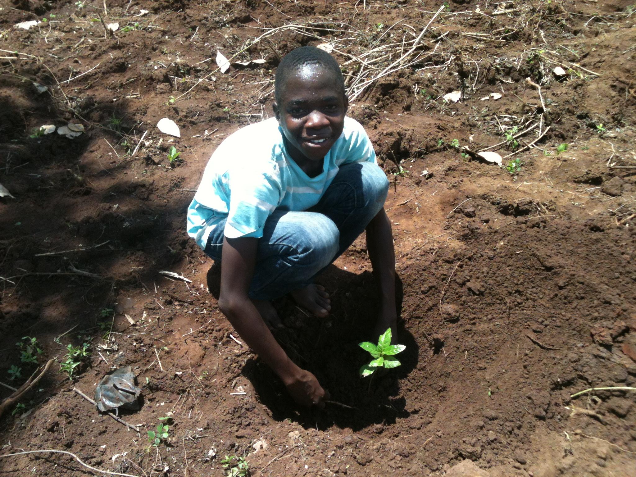 16b Farm planting.JPG