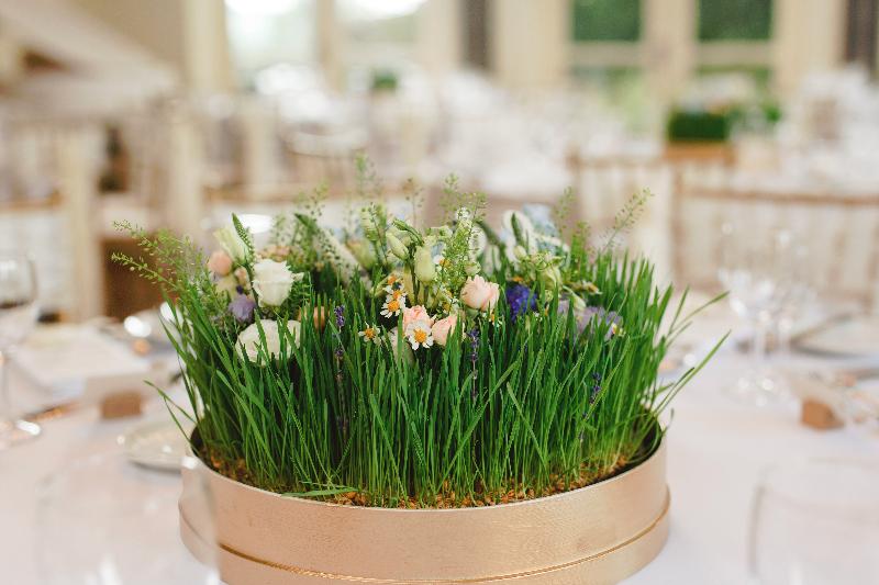 Wheatgrass mini garden by Tineke