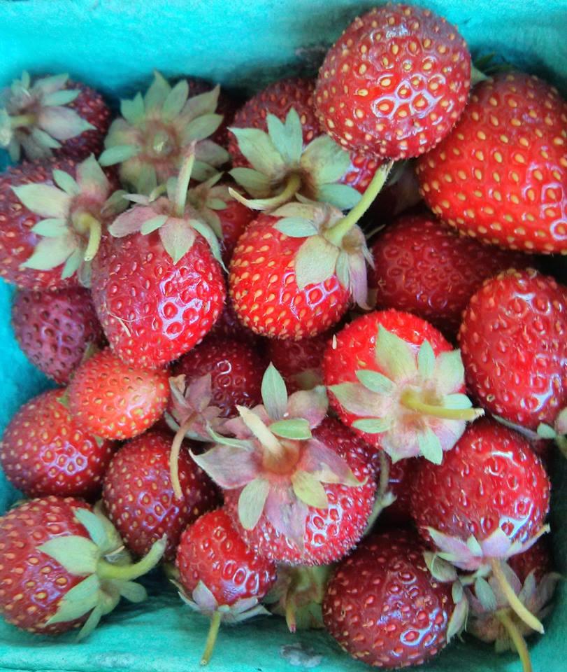 Strawberries LGS.jpg