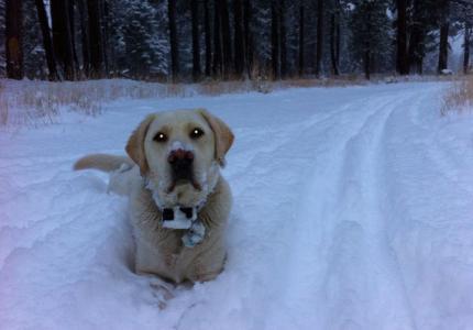 The Snow Dog!  near Taylor Creek