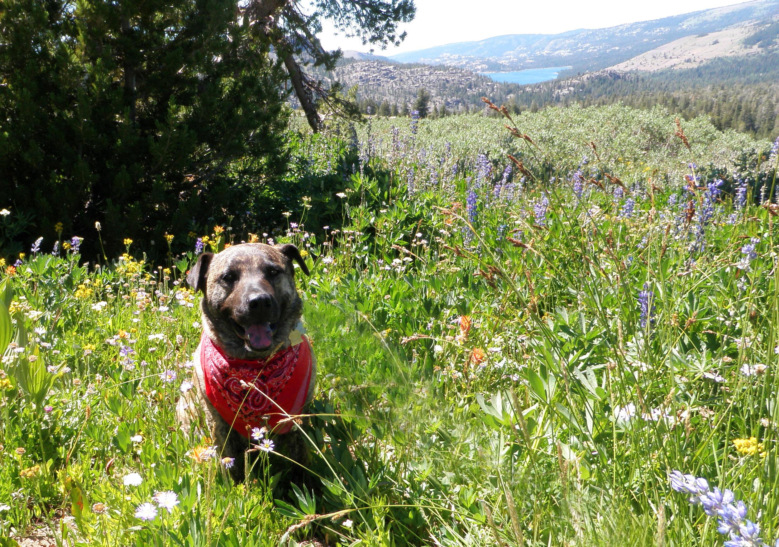 Winnemucca Wildflowers