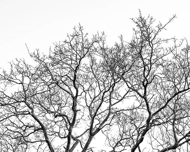Day 13 of #lizzybs365 - The #oldoaktree that is a regular part of my life.  I've chosen a #blackandwhiteminimalist look as sometimes I like to play with this style. Especially as it is sooooo far from my normal photography and not something that I do in life.  As one of natures hoarders, #minimalism is something I can but aspire too but rarely achieve outside of holiday lets and moving house.  Are you a #minimalist, a clutter lover or a hoarder?  #blackandwhiteminimalism #blackandwhitetree #leaflesstree #leaflesstrees #blacknwhite #exploretocreate #bnw_today #365days #everydayphotography #365challenge #365uk #challenge365 #BNW_PLANET_2018 #365daysofphotos #365photochallenge #photochallenge2018 #uktrees #minimalistphotos #treebranches #treeminimalism #bnwminimalist #bnw_photography #treeshapes #treeshape #bnwpotd