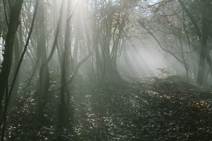 Misty Woods.jpg