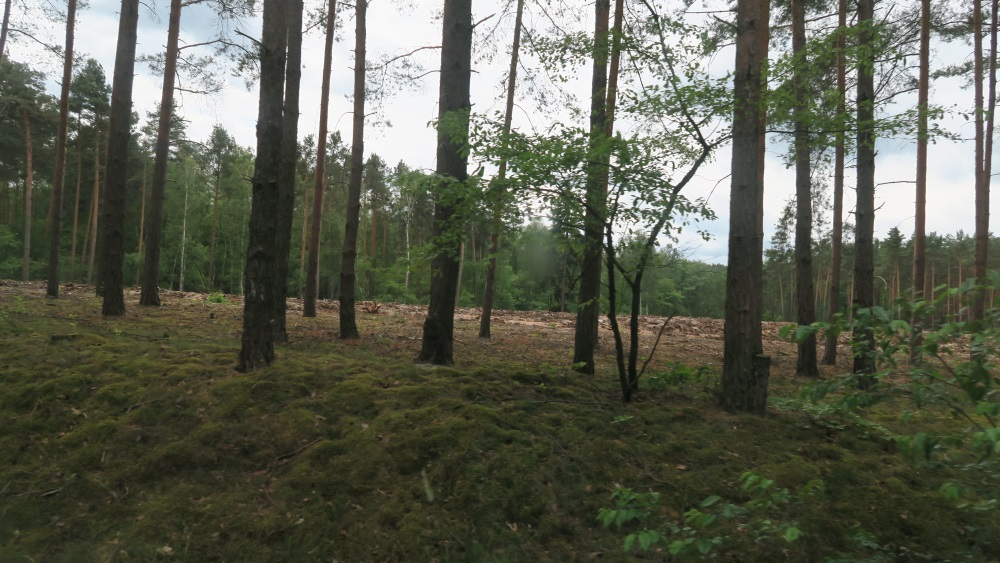 An area where they are clearing the forest.