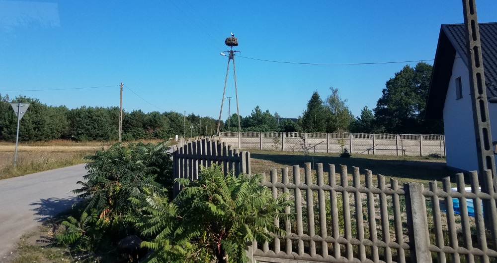 Here's the view of the stork's nest as we drove by on the village roads