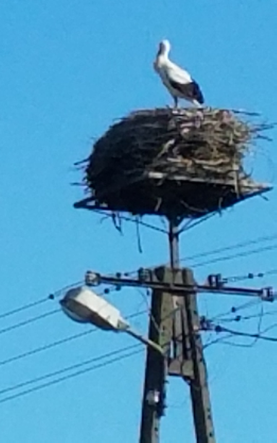 The stork was home!