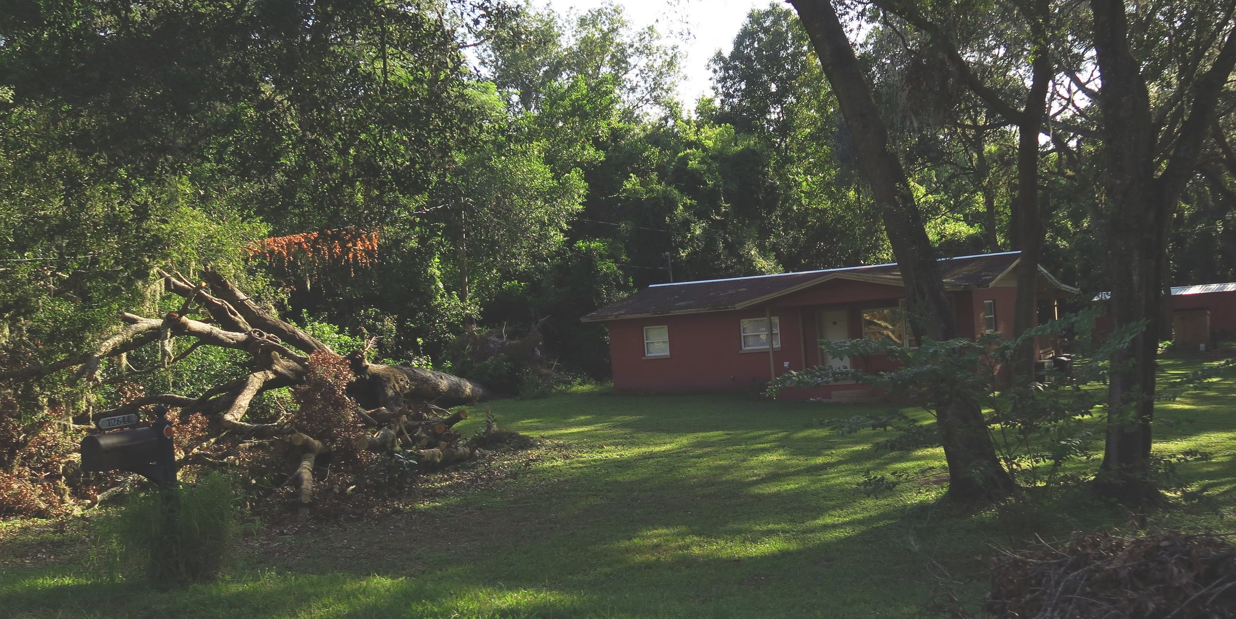 This tree fell away from the neighbor's house. So thankful!