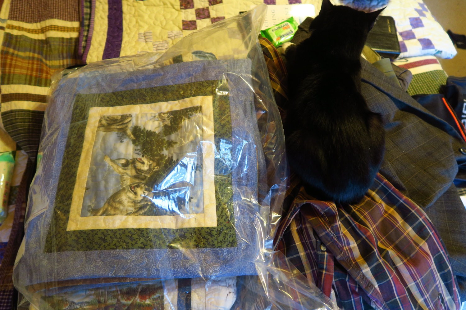 Our cats love to sit on our suitcases as we prepare things to leave. Here my husband has lain out his clothing items to take. Skagway, our elder cat, has laid claim to them! Here's the set in a bag before the air is suctioned out. When my husband came up and saw it, however, he made the cat move!