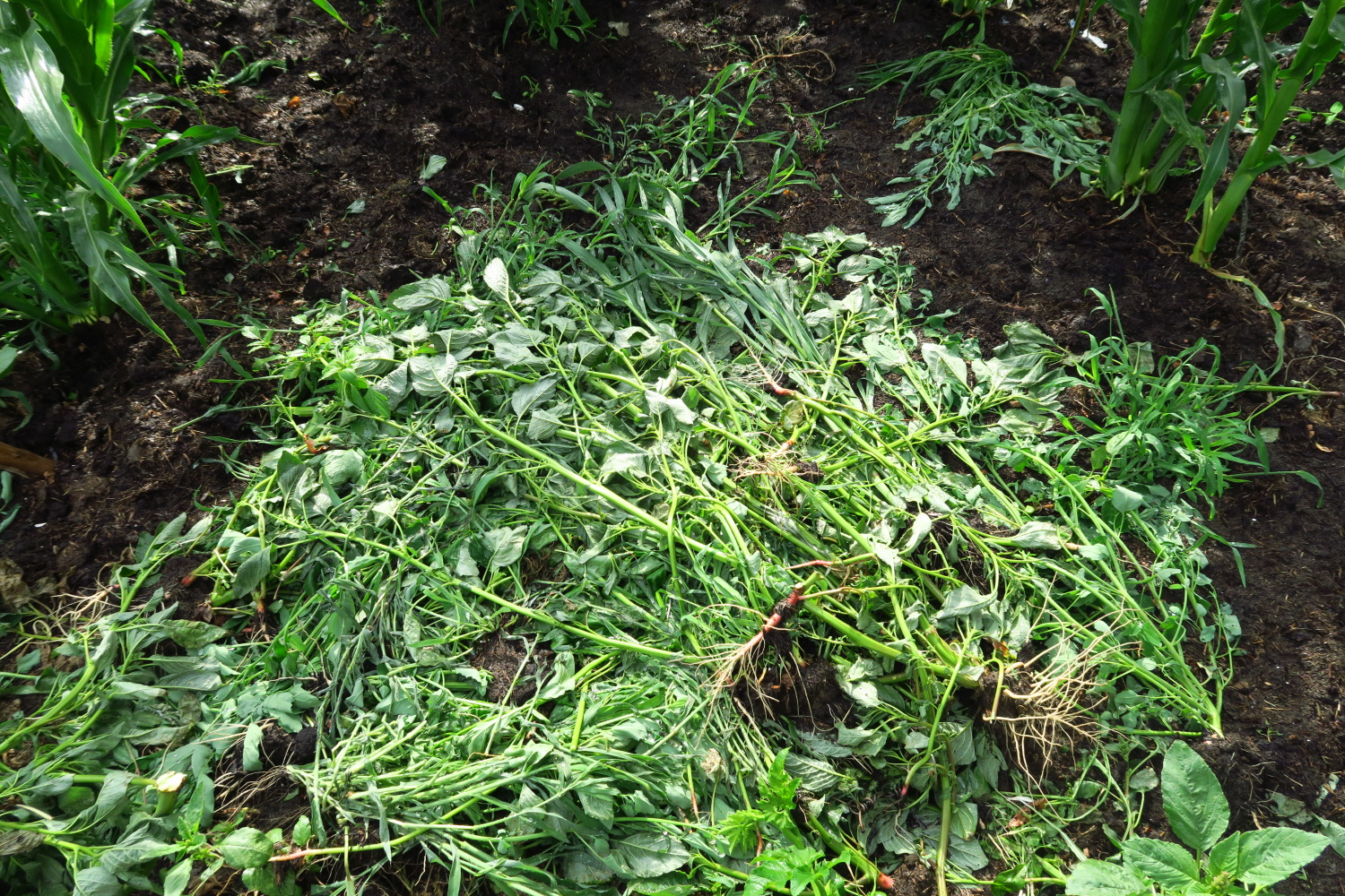 weeds - I just throw them down and let them become compost
