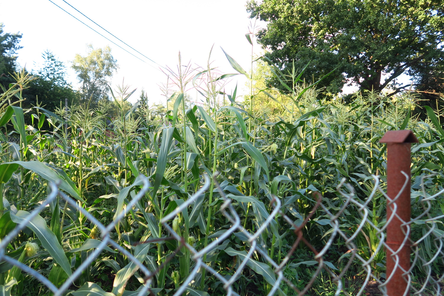 This fence is your typical chain link fence. -about 5' high.