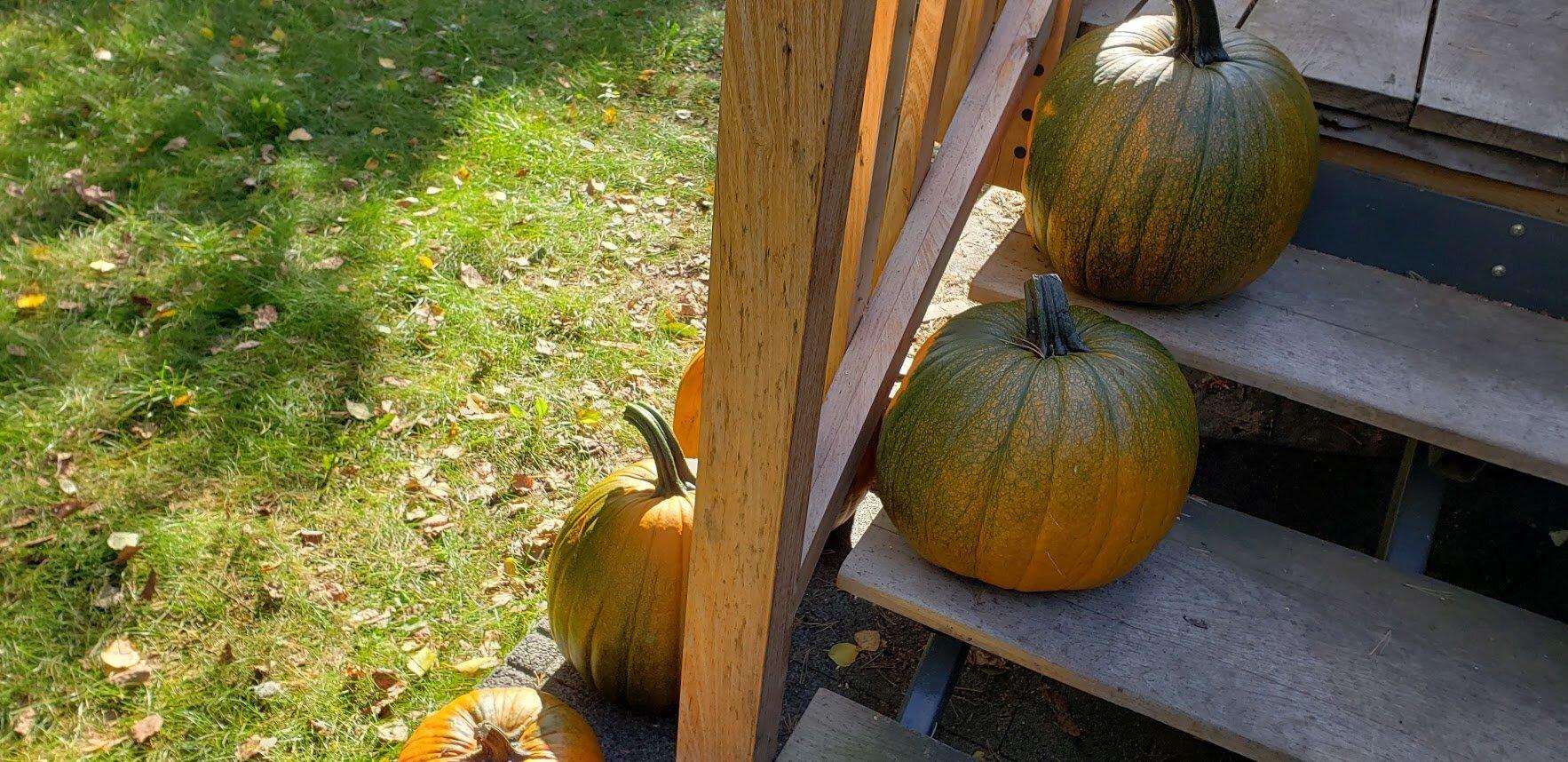 pumpkins 2019 2.jpg