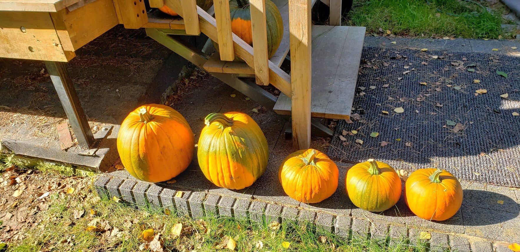 pumpkins 2019 11.jpg