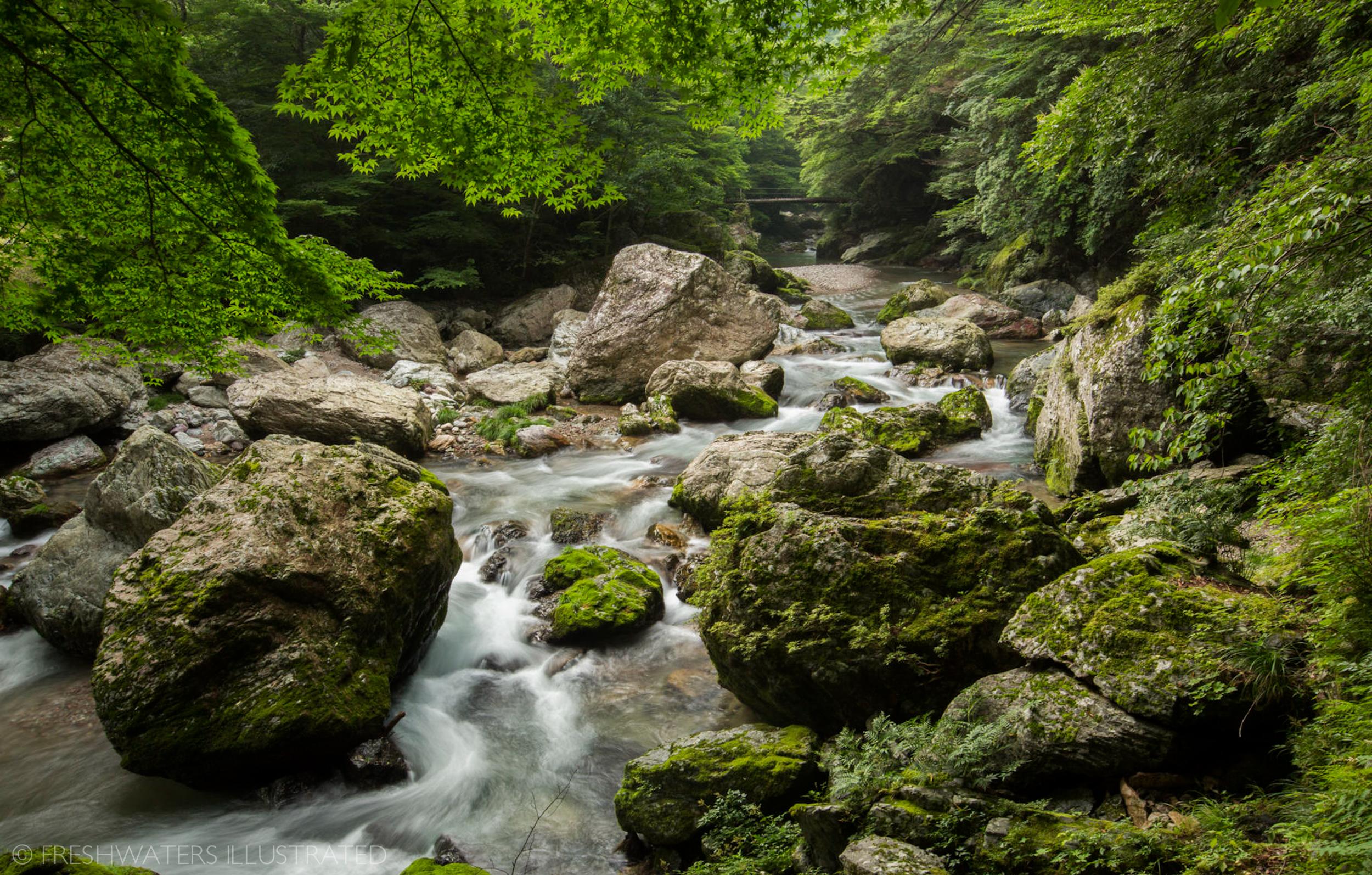 RiverWebs_Freshwaters_IIllustrated-3.jpg