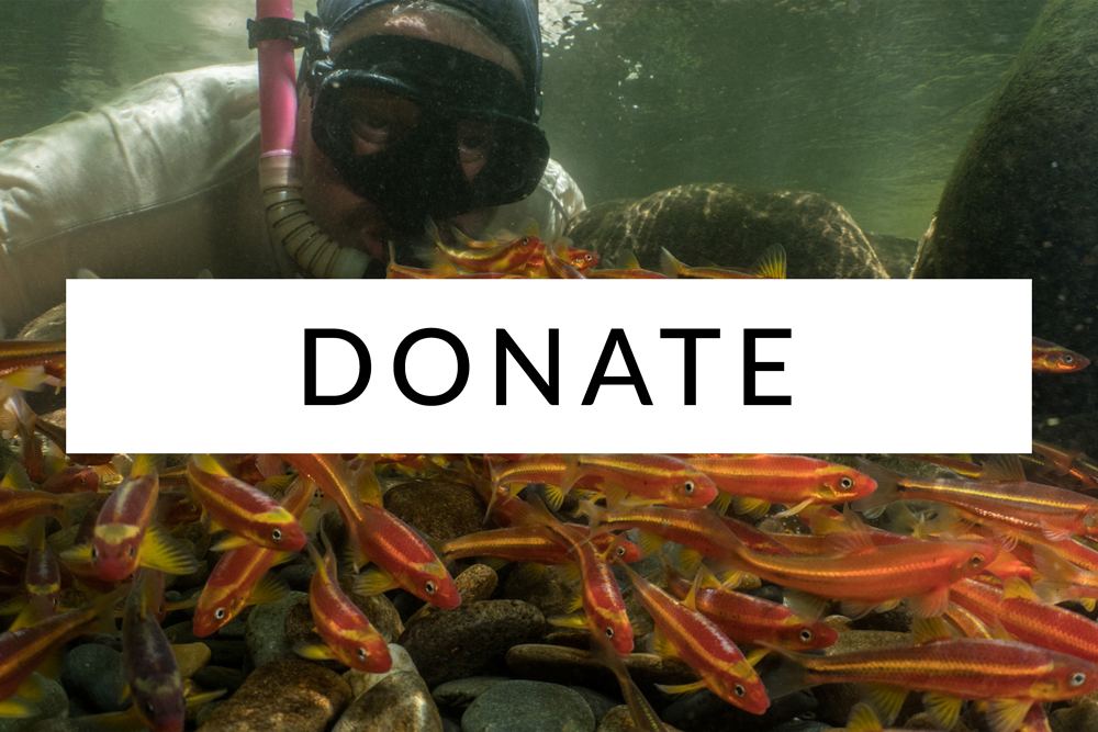 Freshwaters-Illustrated-Donate.jpg