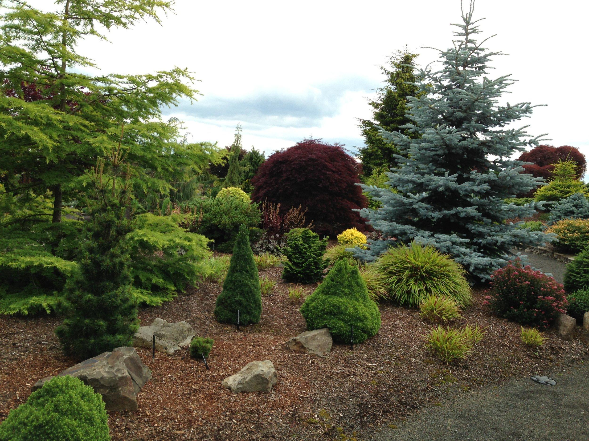 Islei Nursery Conifer Garden 2013