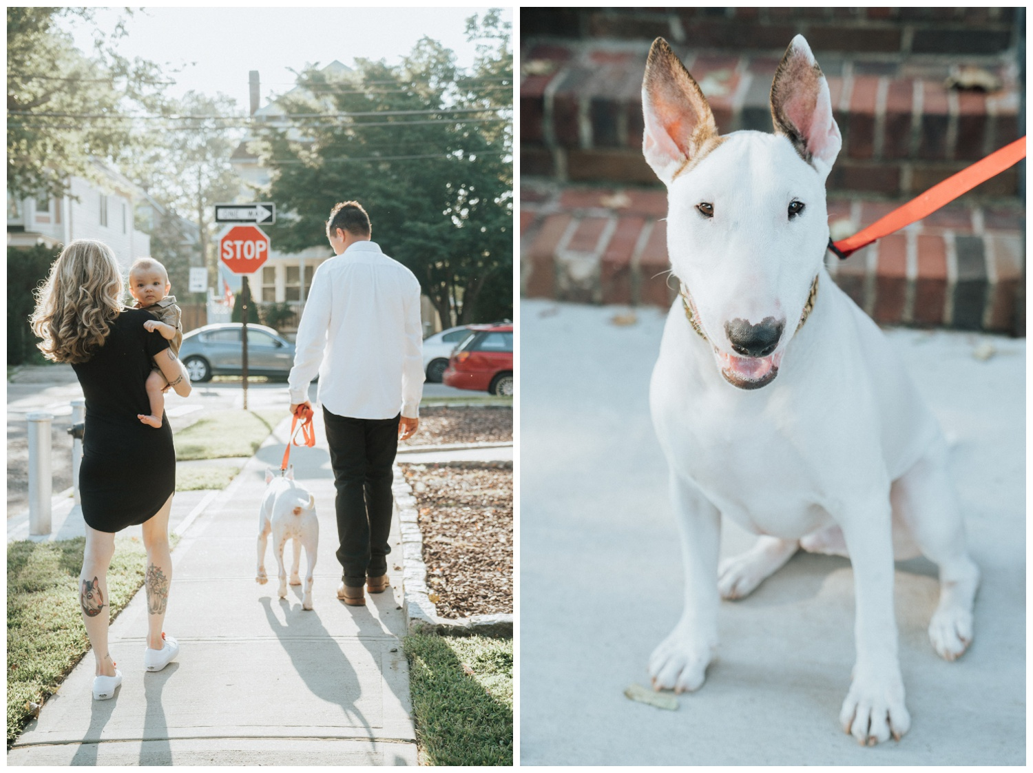 BYOP - Bring Your Own Puppy Engagement Session