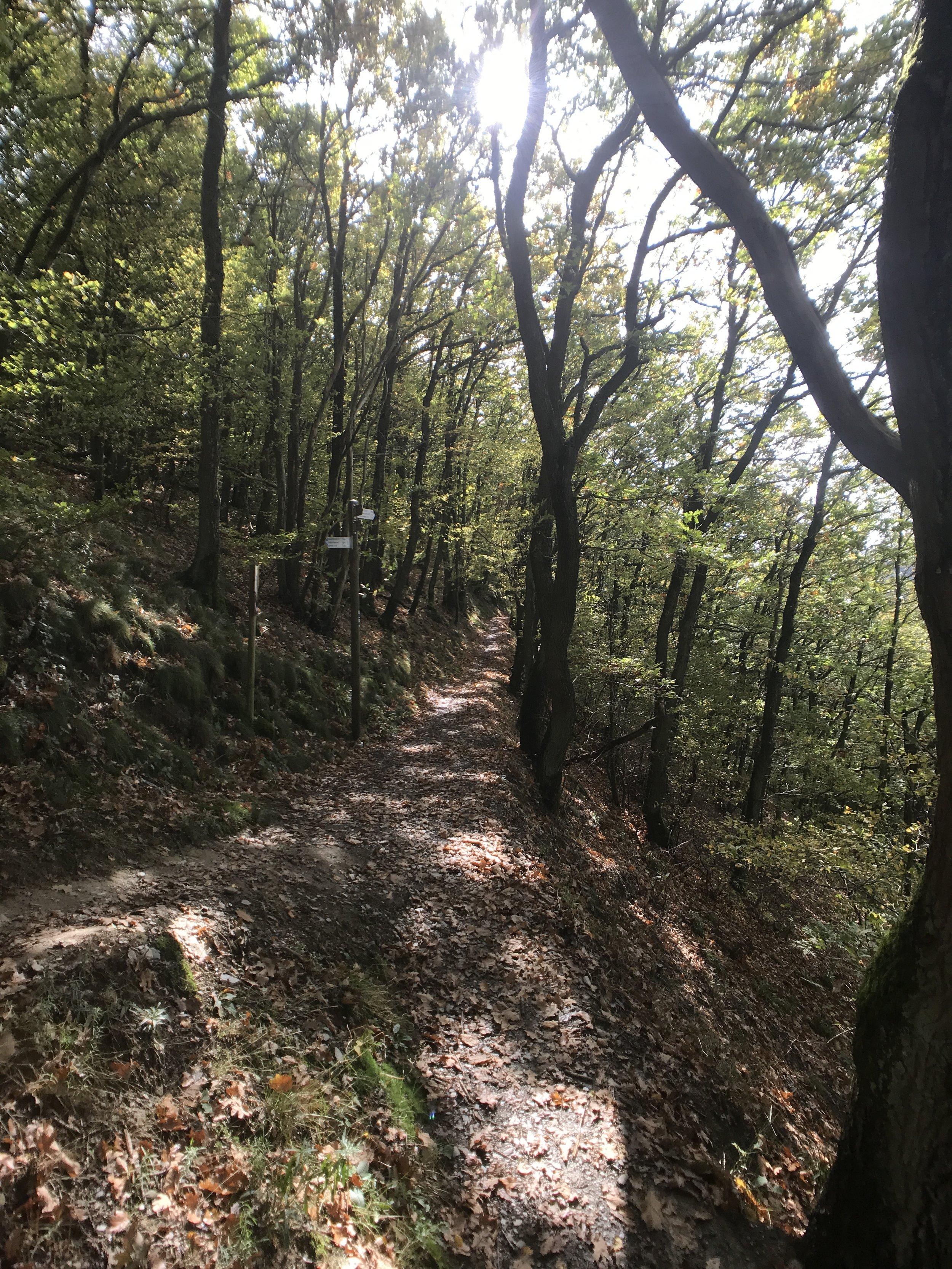 Zurück geht es durch den schmalen Pfad im Wald...