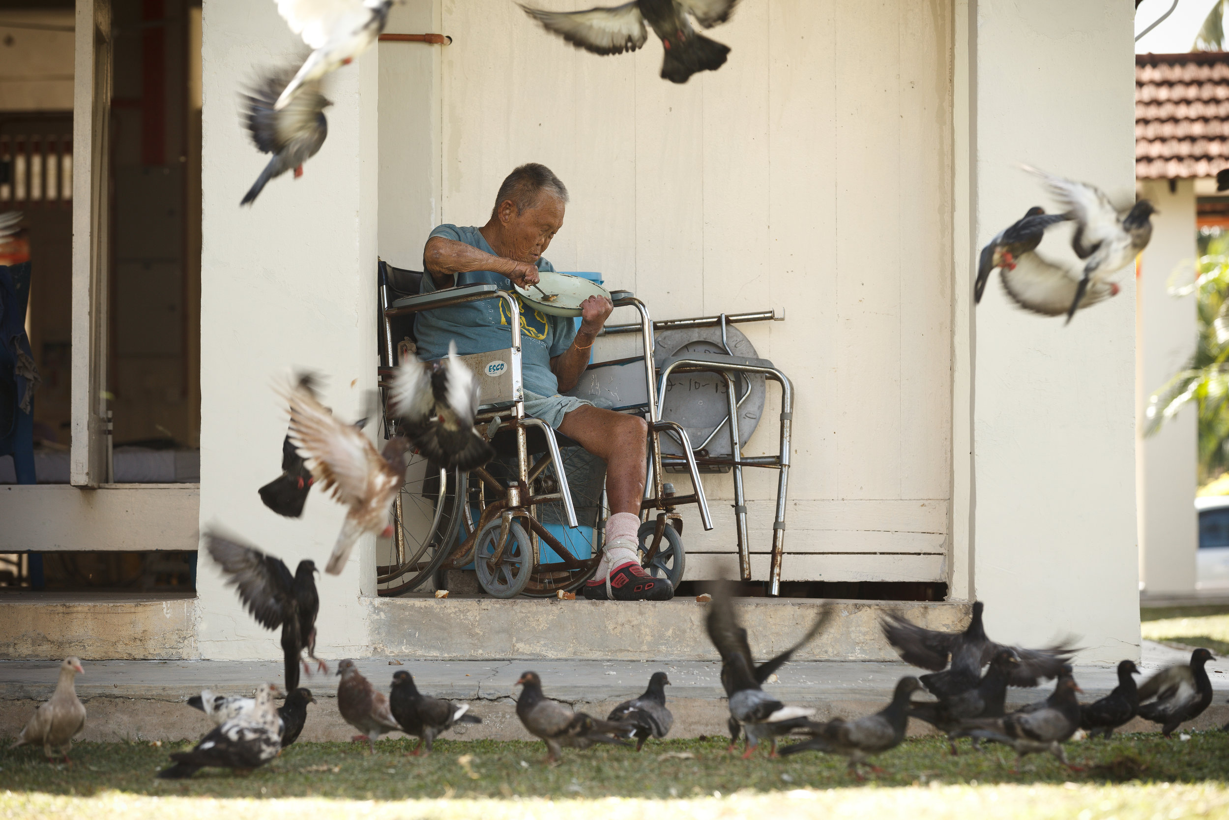 Low would feed the pigeons with his leftover food. (photo by Mango Loke)