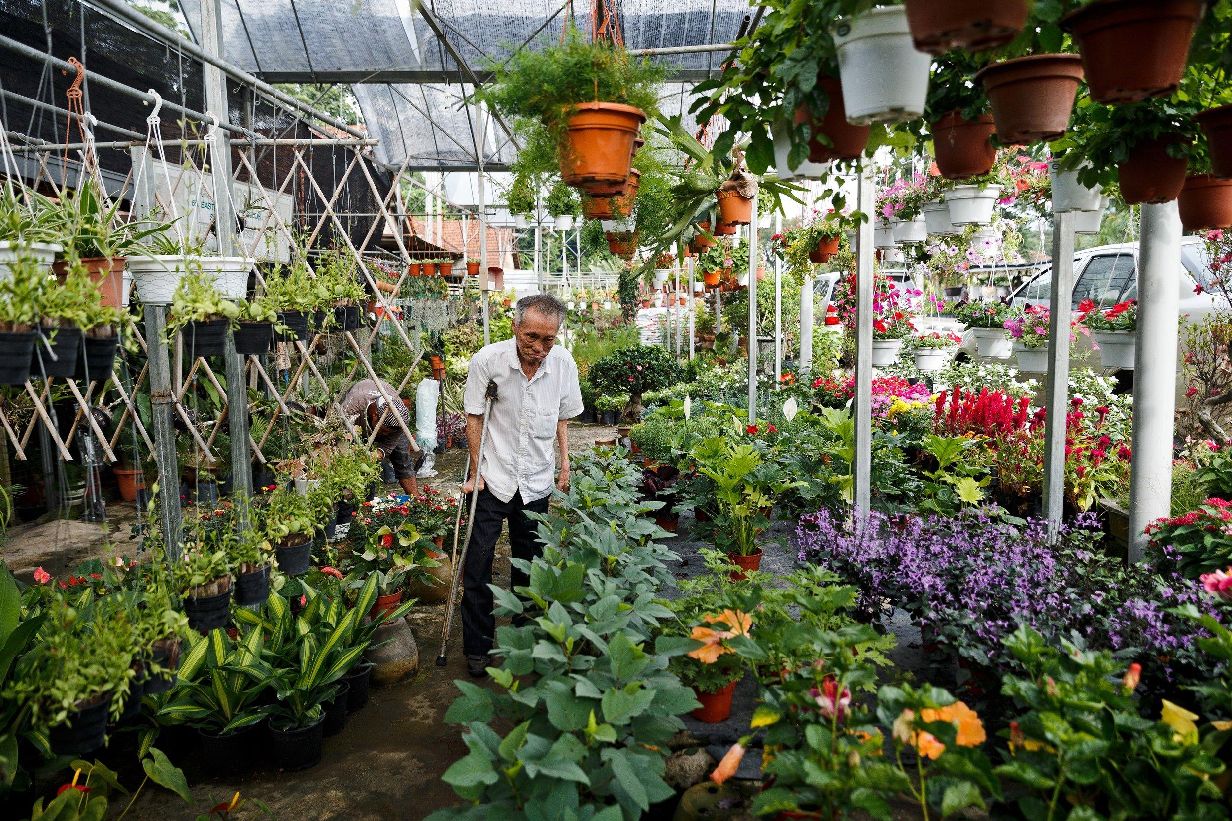 """希望之谷的园艺远近驰名,曾被誉为  """"  花之天堂  """"  。(  陆奕萌 摄)"""