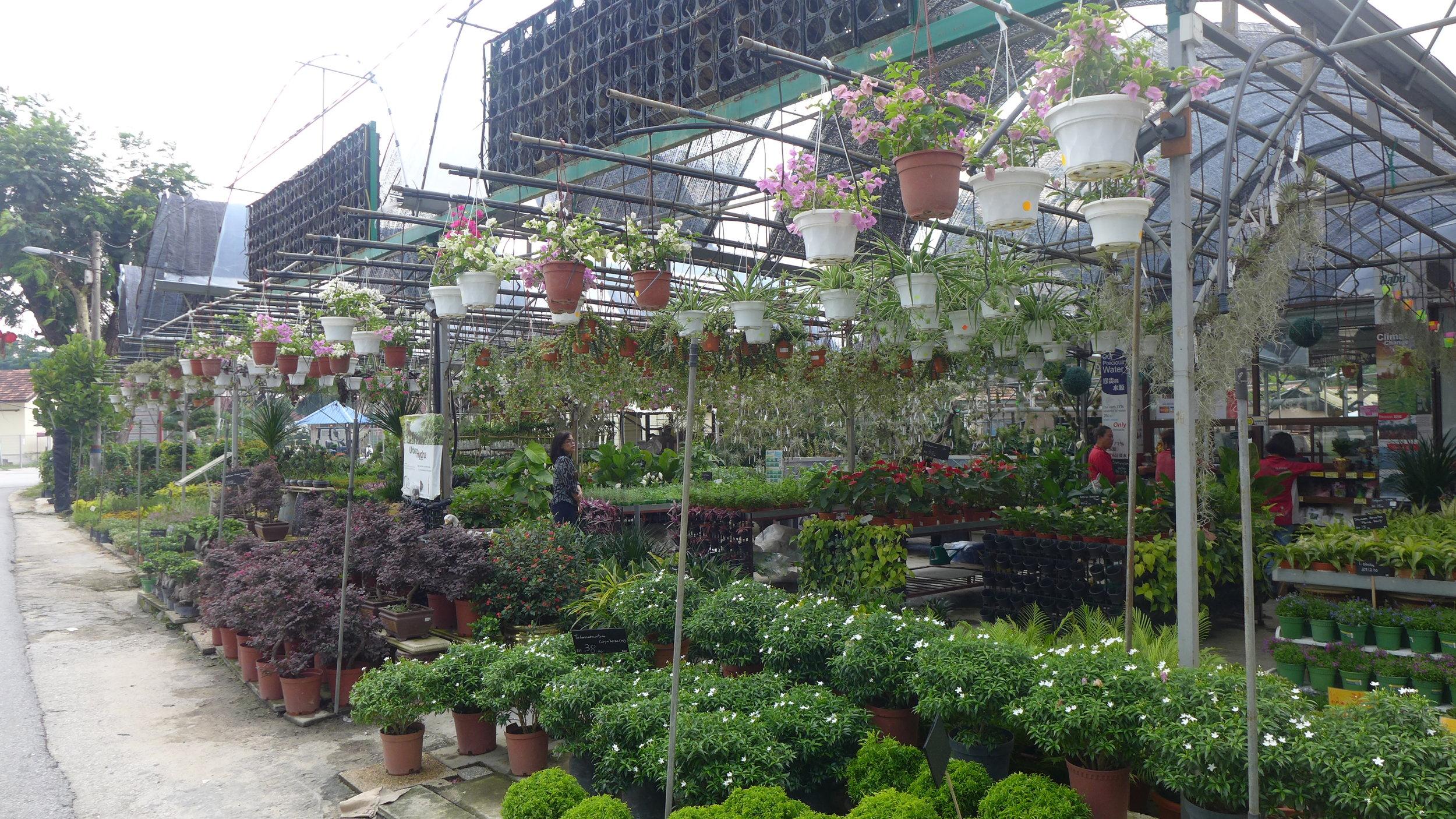 在院区其中一个花圃摆卖的各色鲜生花与观景植物。(陈彦妮 摄)