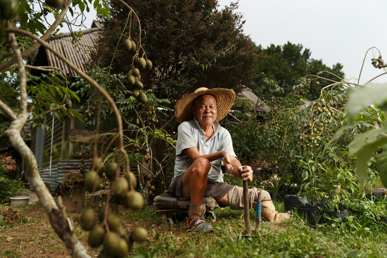 沙梨树苗是卜镜堂最主要的收入来源。(陆奕萌 摄)