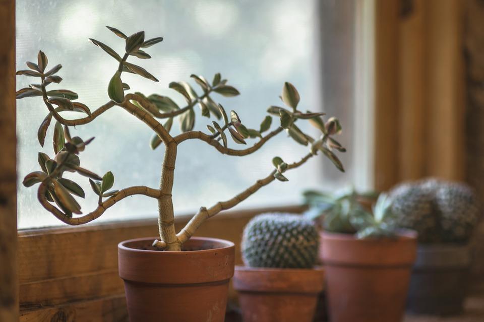 cactus-2556004_960_720.jpg