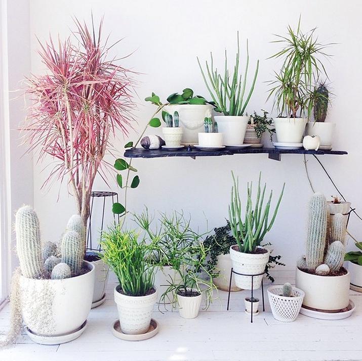 ev_bitkileri_dekorasyon