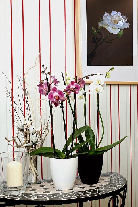 çiçek anlamları 5.jpg