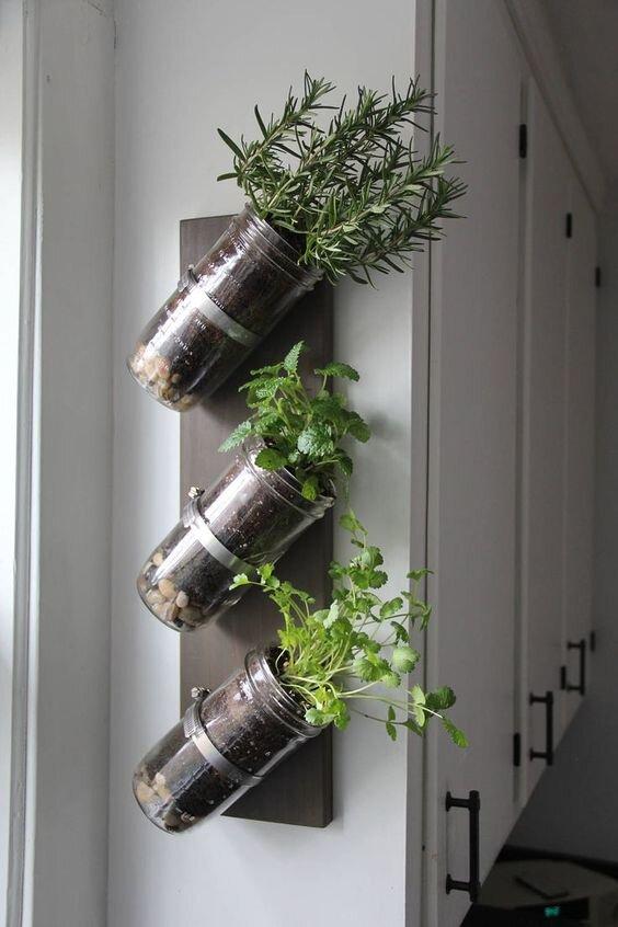 asma-bitki-dekorasyon