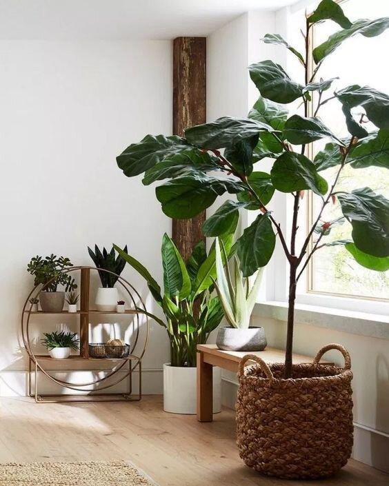 ev-bitkisi-dekorasyon