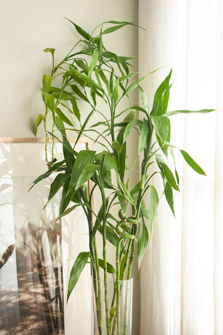 bambu-dekor