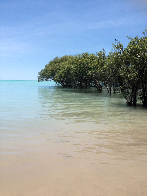 Mangroves revealed at Town Beach