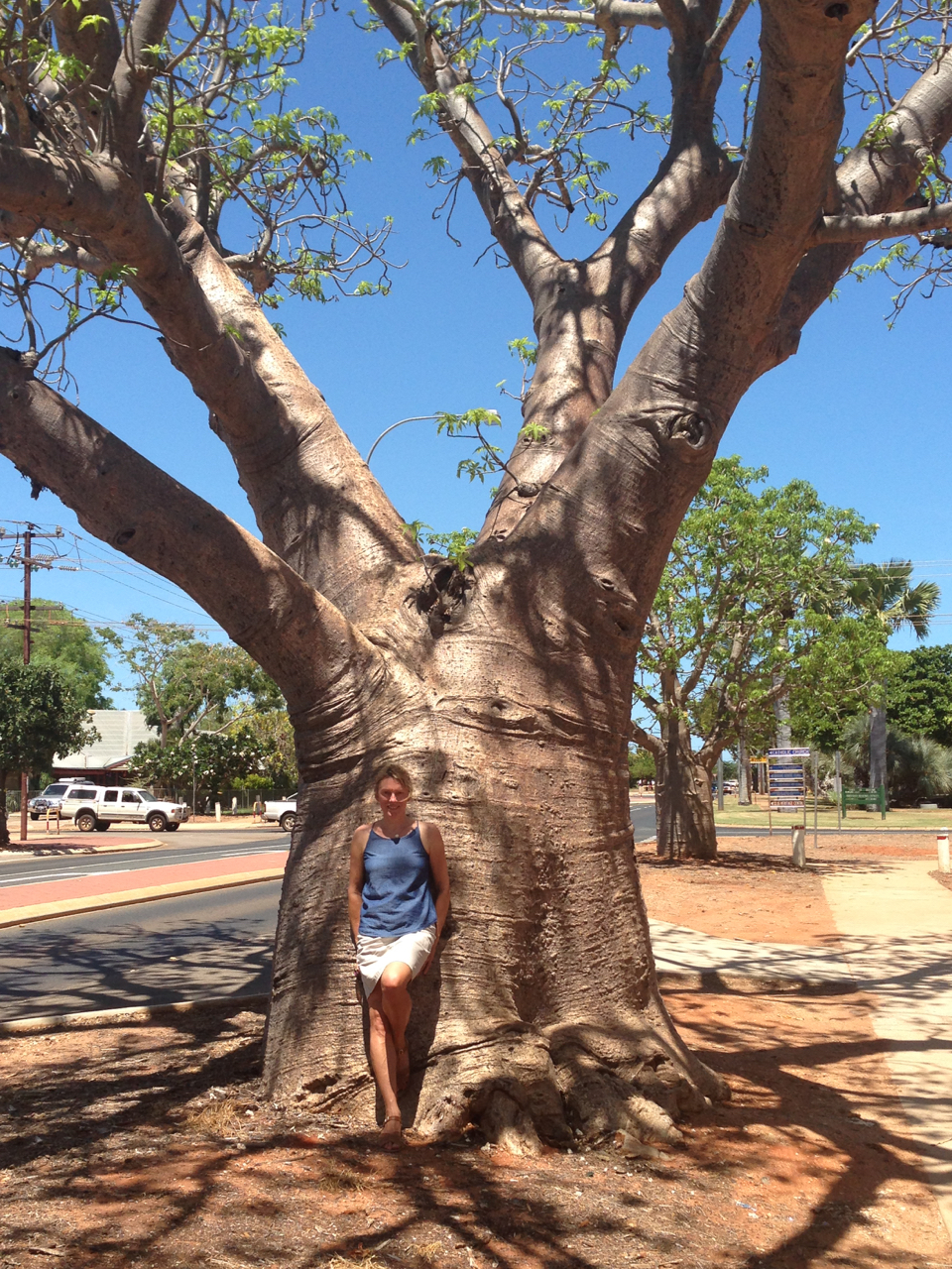 The beautiful Boab tree