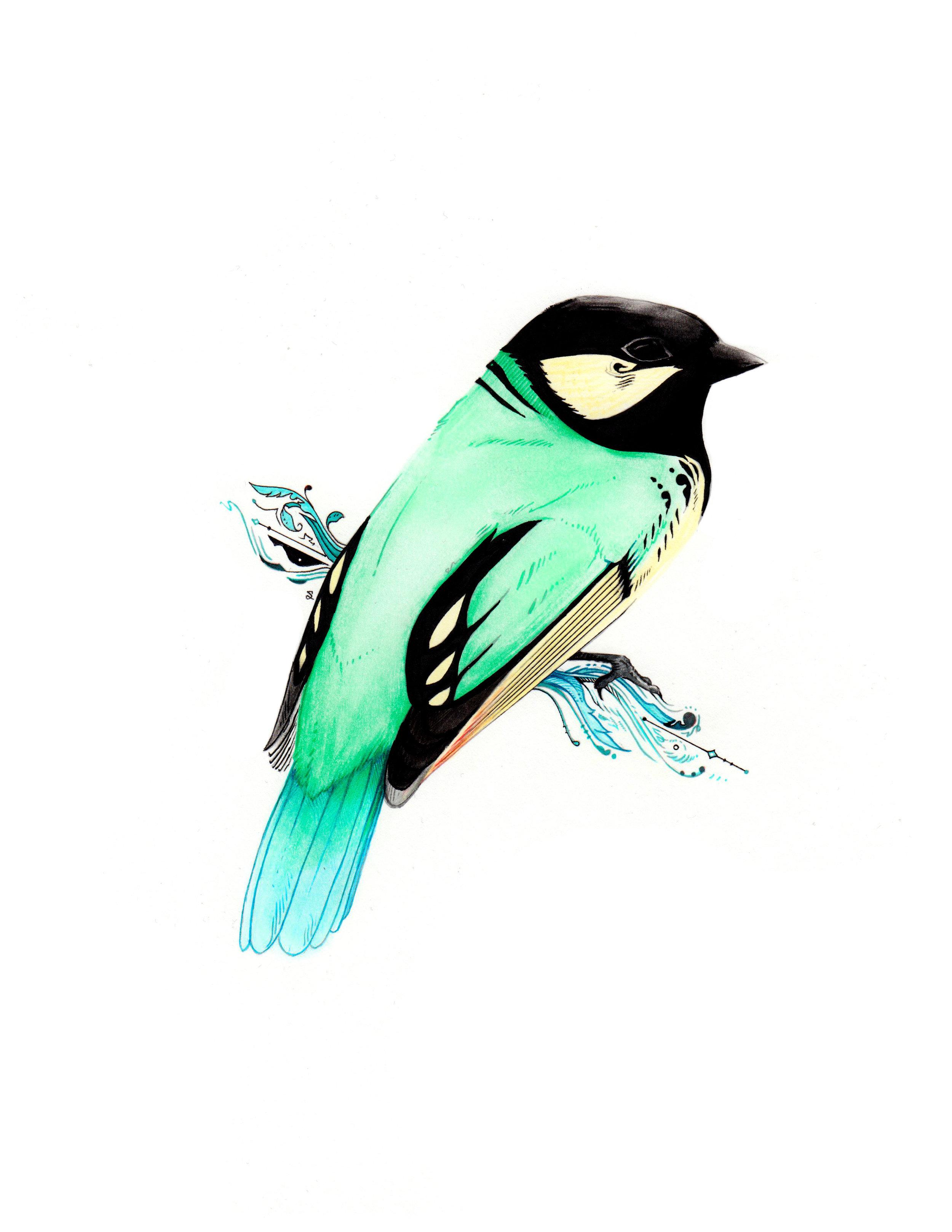 Tit Berrypecker