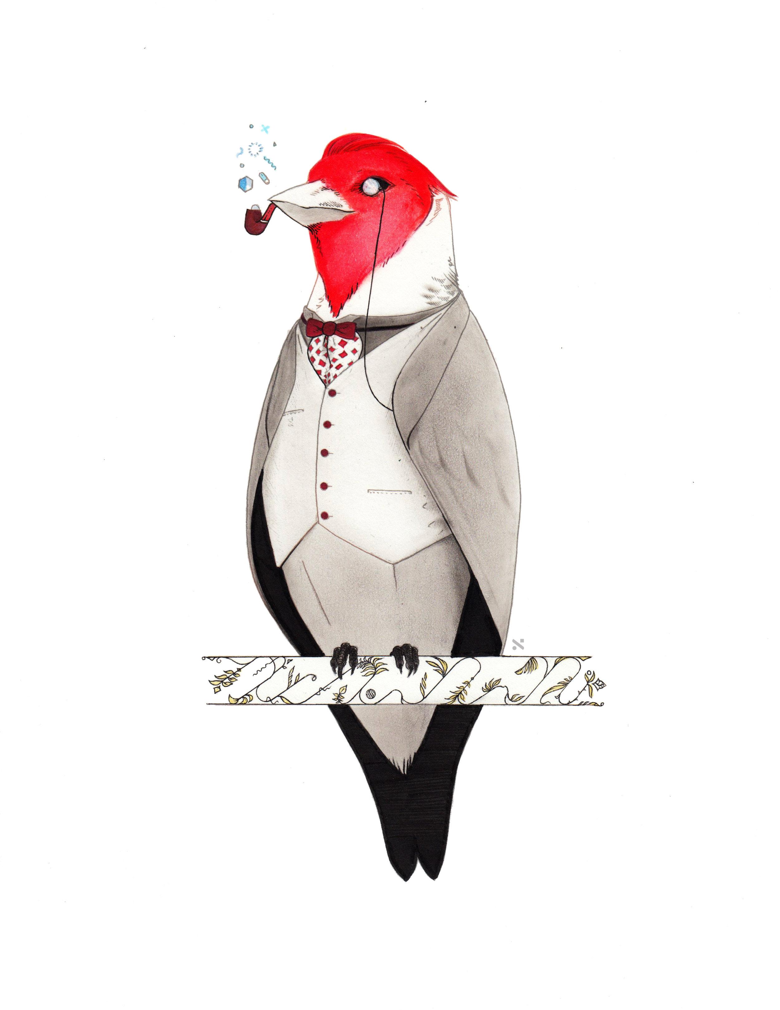 Cardinal Dandy