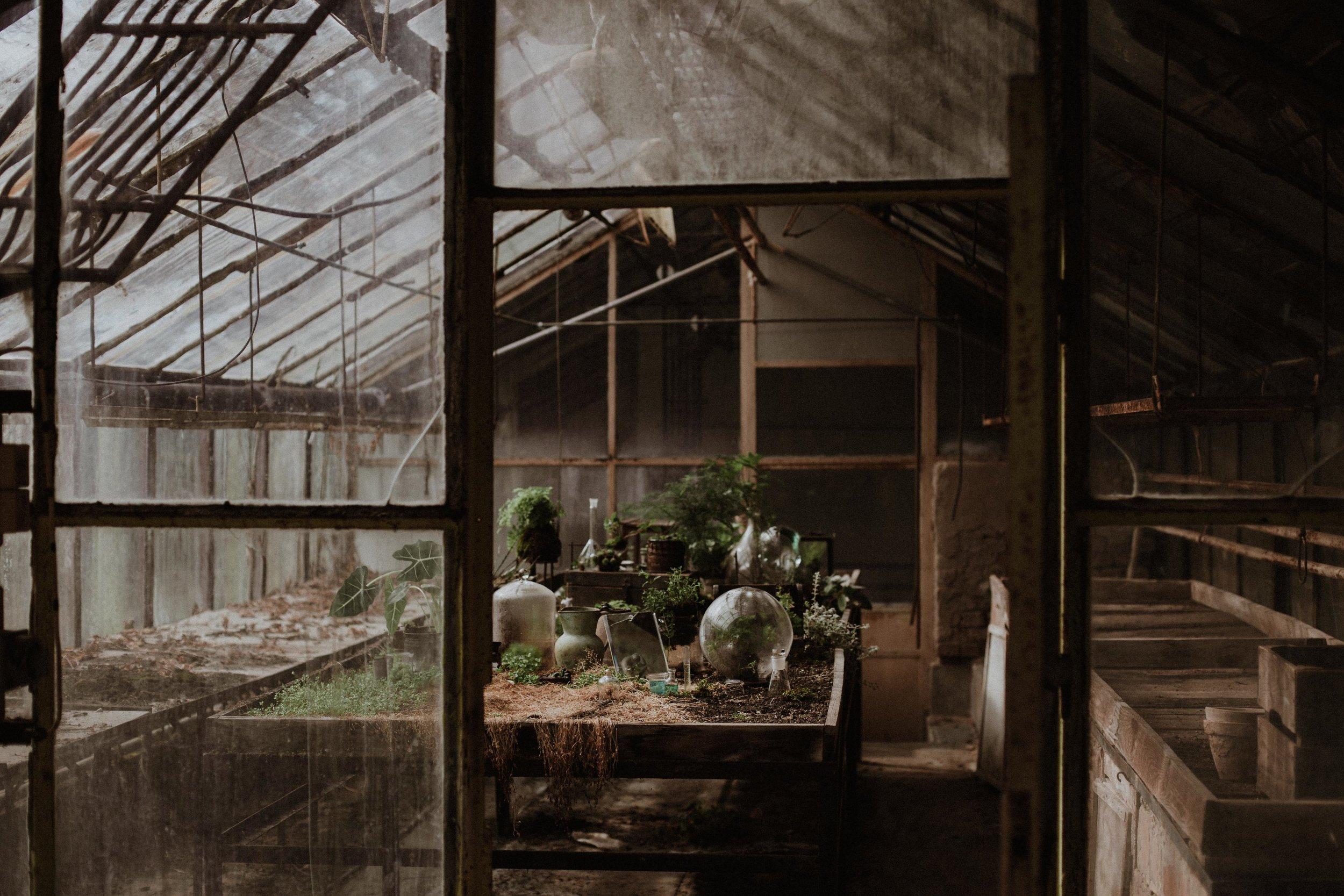 20170321_greenhouse_stsh_w_018__MG_6456.jpg